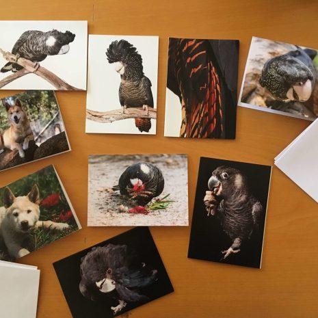 Pack of 9 greeting cards Kaarakin